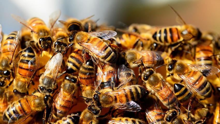 Seisi pesawat langsung dikerubungi serangga yang menyengat itu.