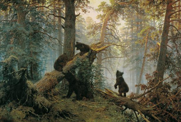 Jutro v borovem gozdu