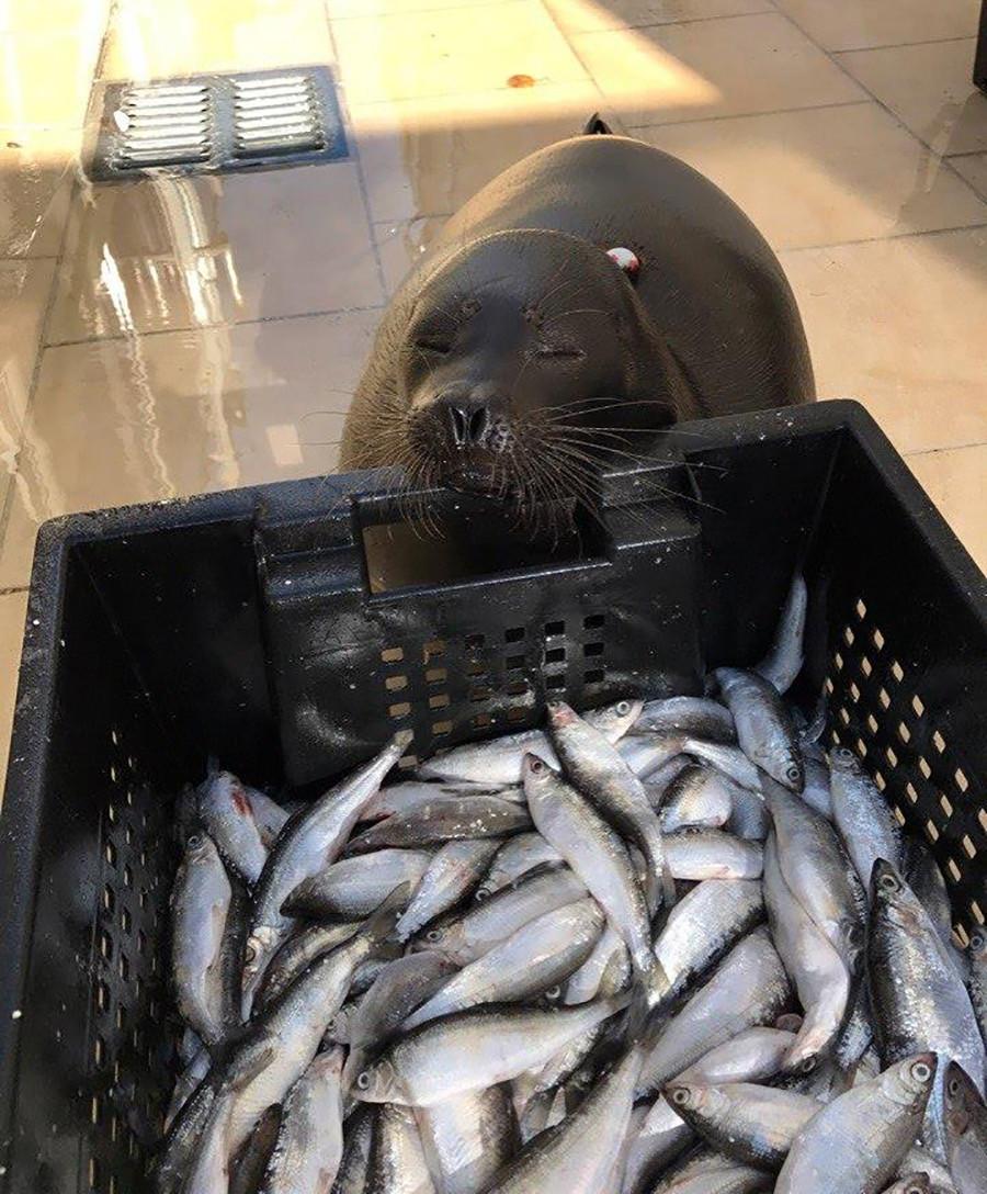 Крошик воли рибу