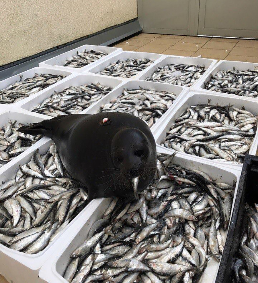 Lebih banyak ikan, lebih baik.