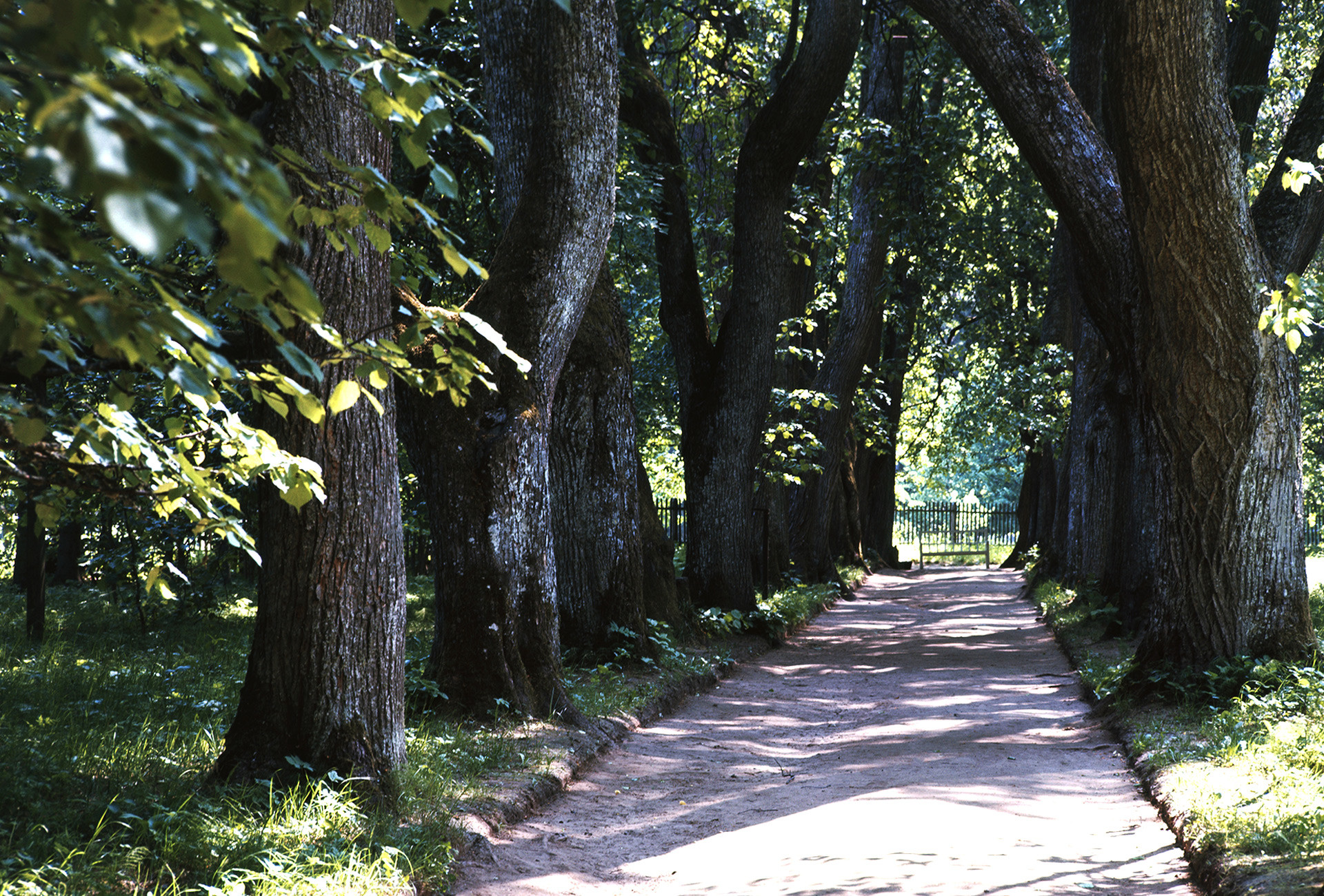 Linden alley in Pushkin museum-estate in Pskov Region called 'Kern' under the name of the poet's beloved woman