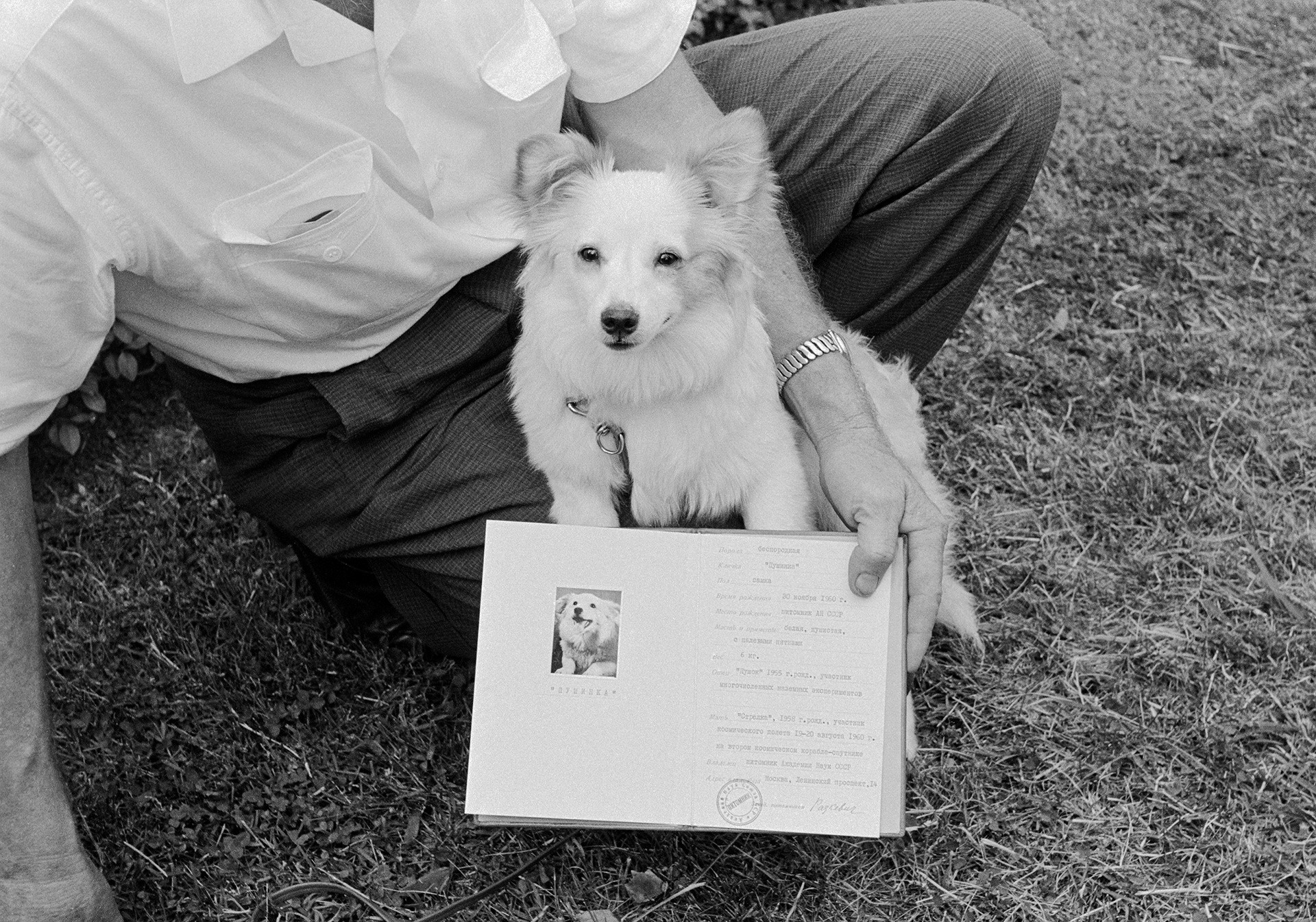 Pushinka with her Russian passport (yes, she had one!) soon after her arrival to the U.S.