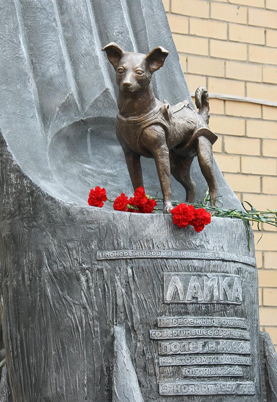Laika startete im Jahr 1957 als erster Hund an Bord eines Satelliten in den Weltraum. Aber: Wenige Stunden nach dem Start starb sie infolge der großen Hitze und an Stress.