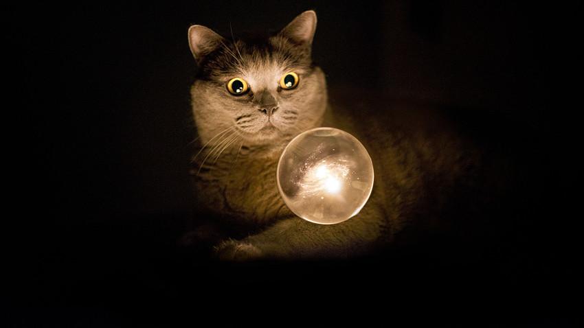 Resultado de imagem para gato e seu poder de cura