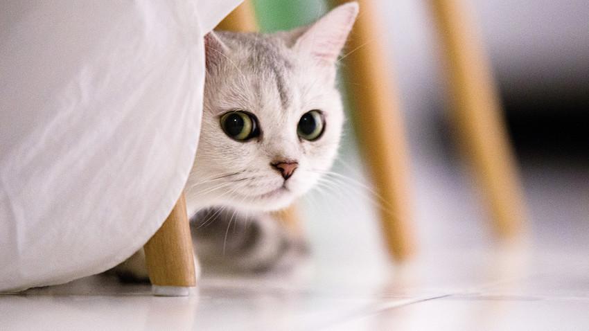 Ten cuidado con tus secretos, es posible que tu gato los conozca demasiado bien.