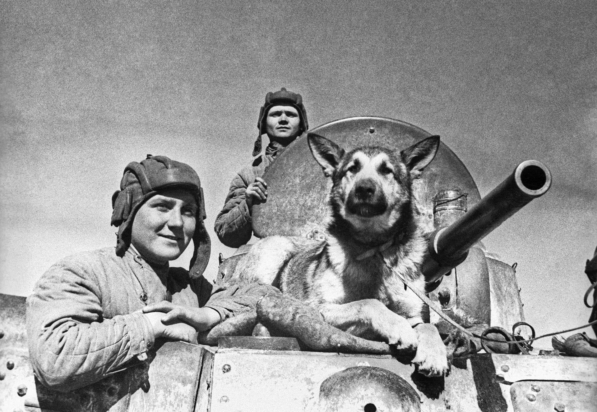 Na sovjetskem oklepniku BA-10: Višji narednik E. P. Enderkson, narednik V. P. Poršakov, T. D. Derenko in ovčar Džulbars.