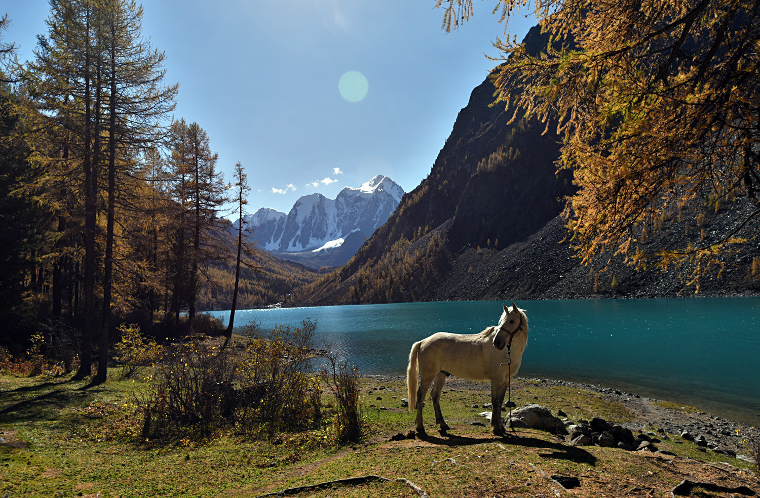 A horse grazes at Nizhneye Shavlinskoye Lake in the Kosh-Agachsky district of the Altai Republic.