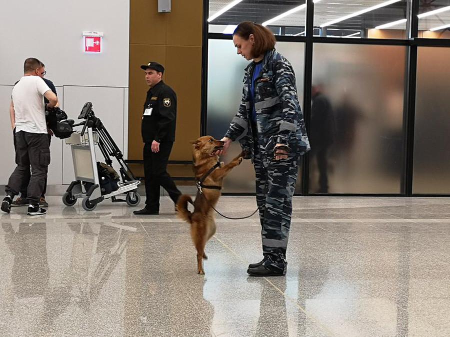 Dieser Hund erschnüffelt Schmuggelware. Diese Rasse ist eine Kreuzung zwischen einem nordkaukasischen Schakal und einem arktischen Rentierhirtenhund.