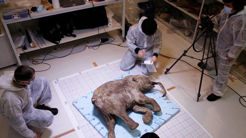 Jenis kerusakan tertentu pada DNA mamut mungkin telah menyebabkan kepunahan mereka.
