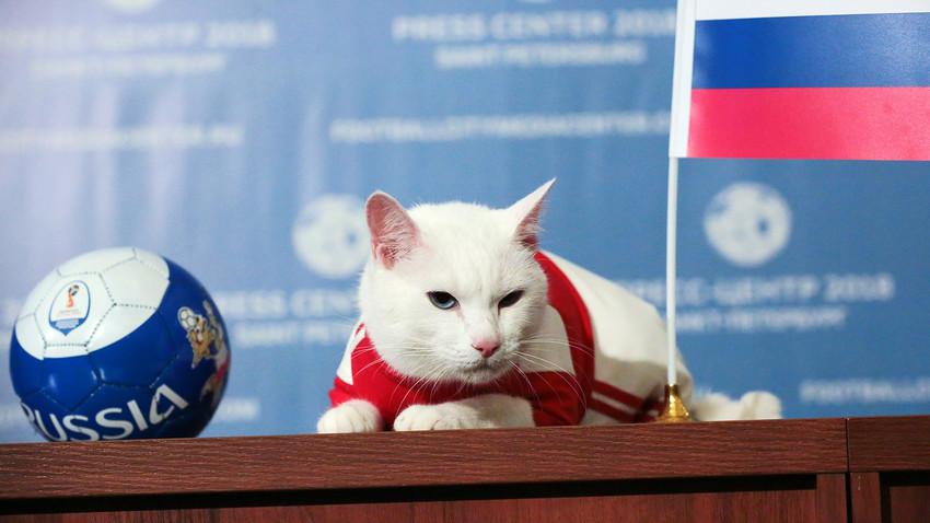 "Ahilej, mačak-prorok iz muzeja ""Ermitaž"" u Sankt-Peterburgu"