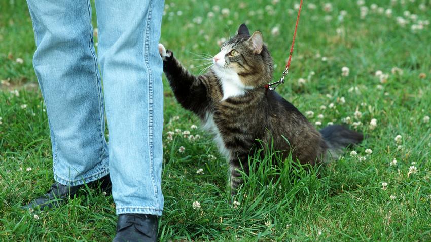 Американската академия по алергия, астма и имунология твърди, че около 50 милиона американци са алергични към котки