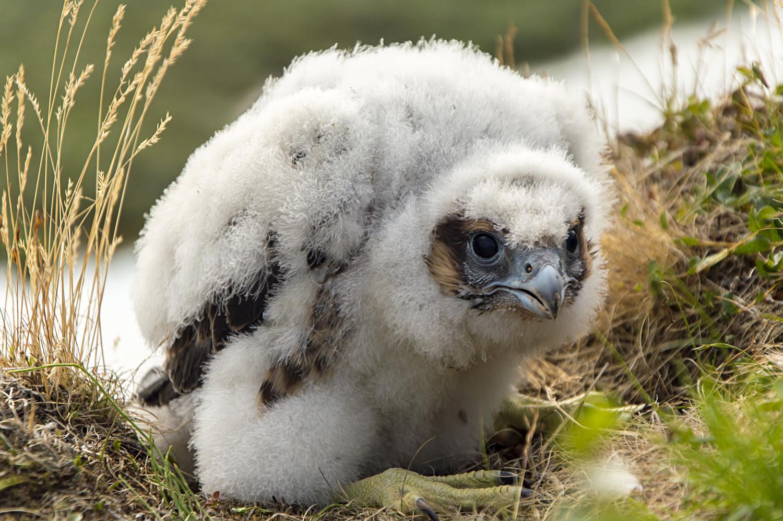 Quindici meravigliose specie animali della Russia... dalle