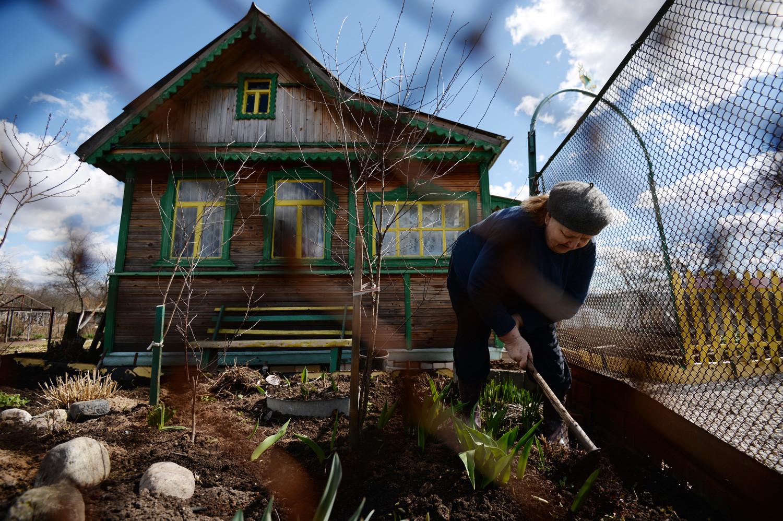 Seorang warga mencangkul halamannya di permukiman Pankovka, Novgorod.