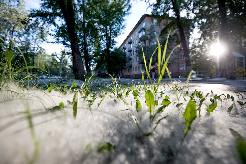 Poplar fluff in a 'khrushchevka' courtyard