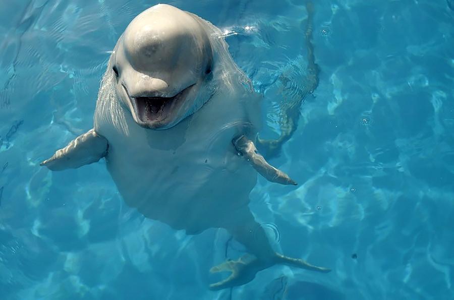 Бели кит Пузирјок