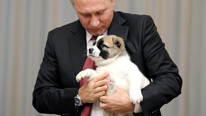 2017年10月11日。ロシアのプーチン大統領が誕生日プレゼントとしてラディソン・ブルー・リゾート・ホテルでトルクメニスタンの大統領グルバングル・ベルディムハメドフ氏に贈られた子犬を抱いている。