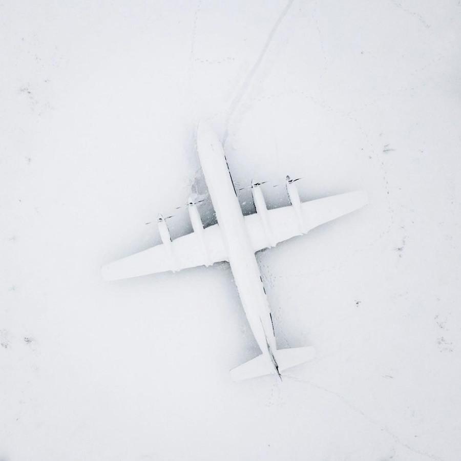 白い鳥、モスクワ州