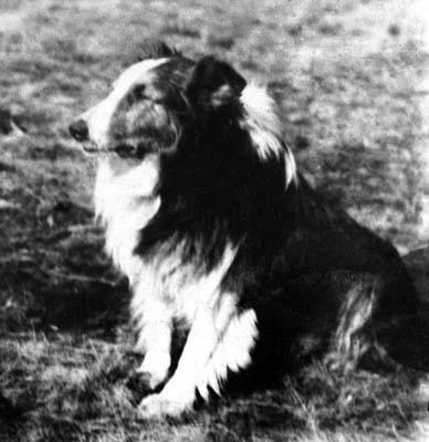 A pesar de las múltiples heridas sufridas, Dick, ganó muchas exposiciones caninas después de la victoria.