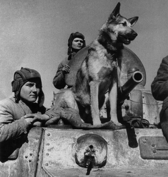 Dzhulbars fue el único perro que recibió una Medalla por el Servicio de Combate.