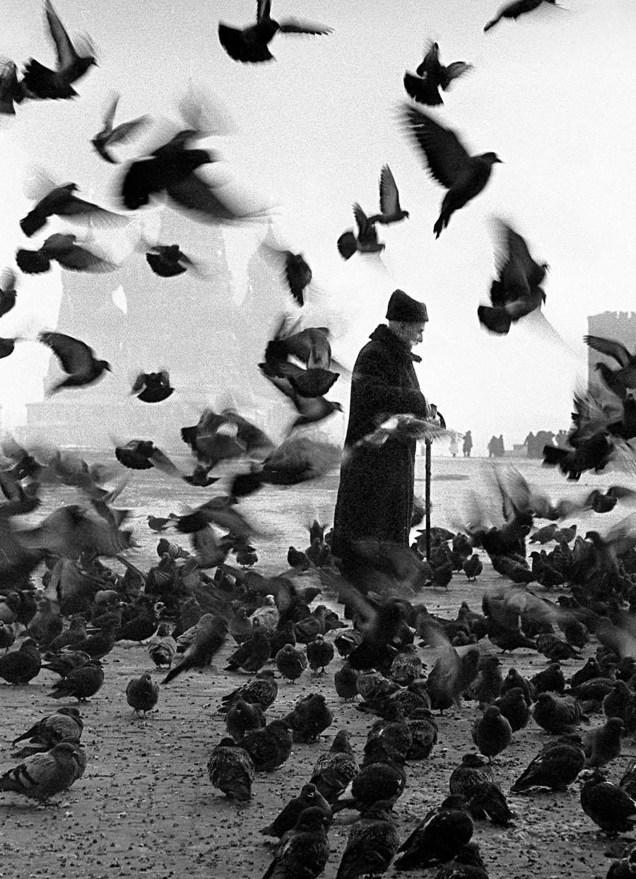 Anciano y palomas, años 50-60.