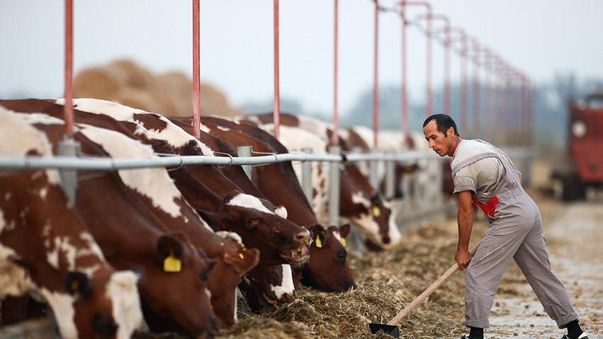 Apa keuntungan utama bagi petani di Rusia?