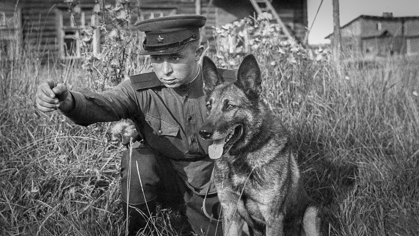 レニングラードの防衛。1943年。