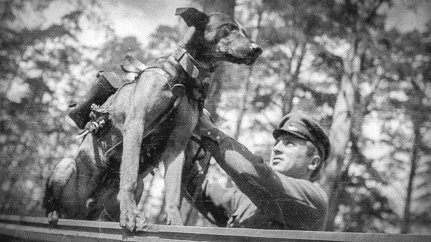 Perros antitanque de Rusia