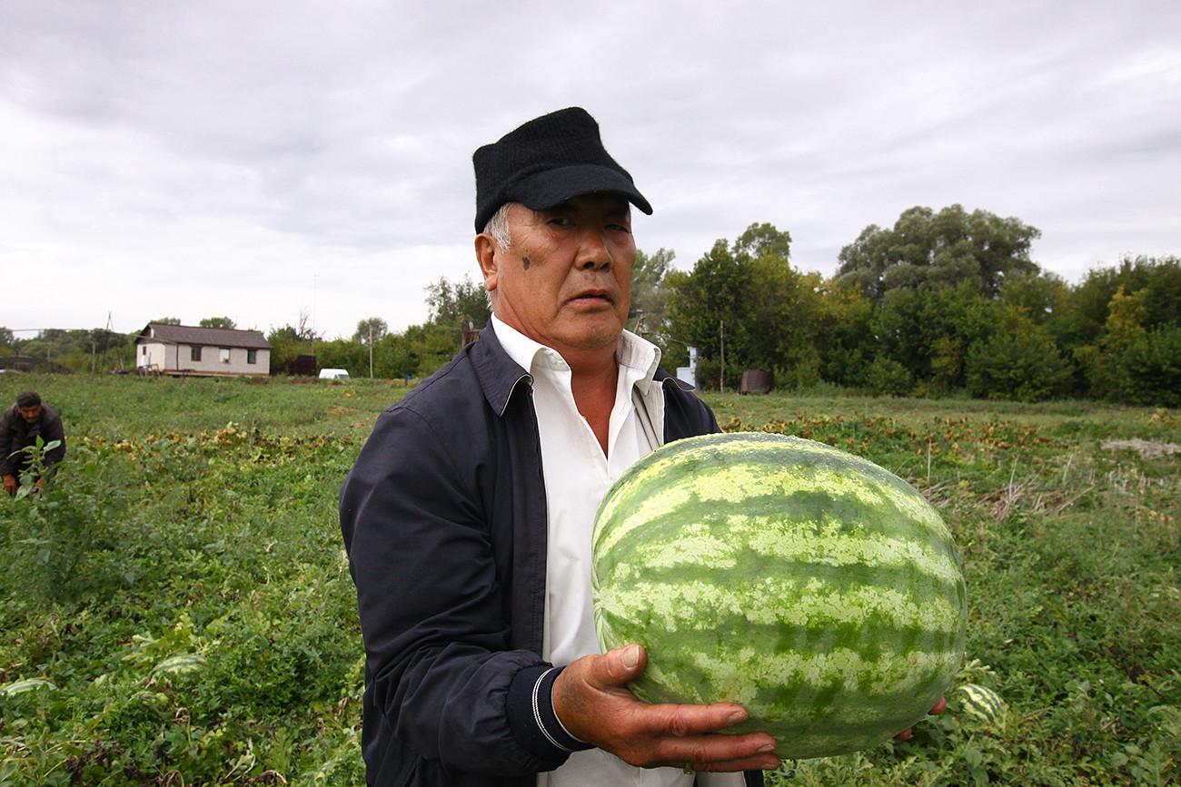 Sebagai birokrat yang beralih menjadi petani, Sim Oyra adalah perintis semangka Bashkortostan.
