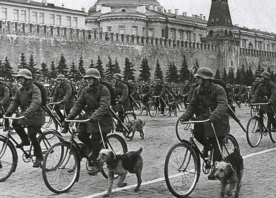 赤の広場でのパレード、モスクワ。自転車に乗っている軍用犬の調教師。