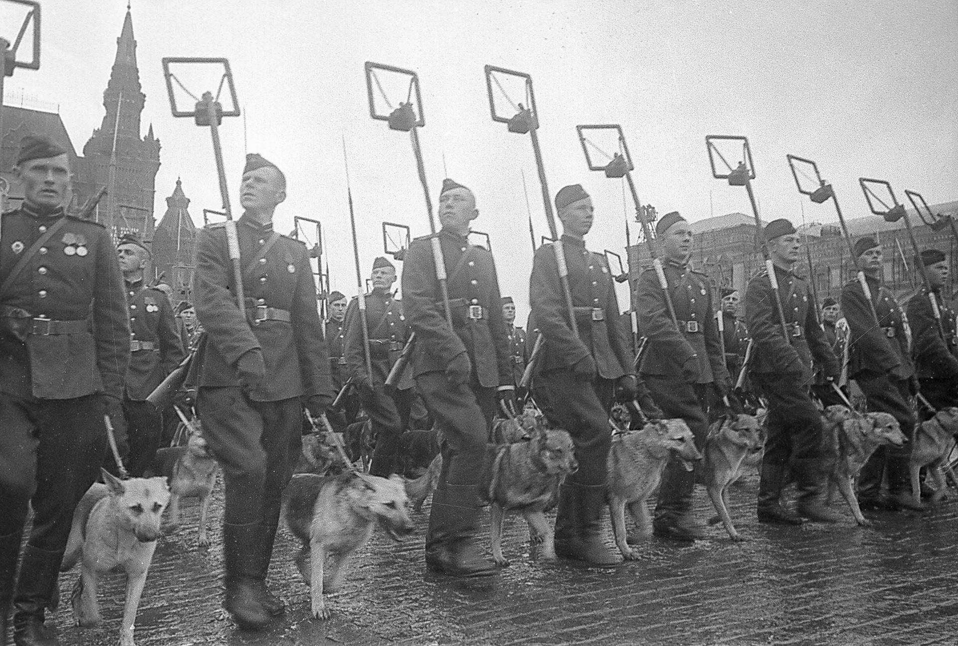 Припадници на службата за деминирање со кучиња на Парадата на Победа на Црвениот плоштад во Москва.