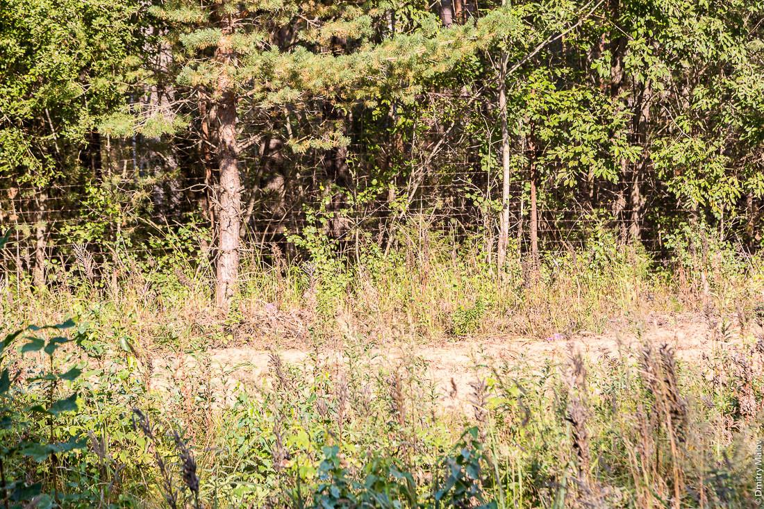 ロシア本土に近い道路の右側に有刺鉄線が張られている。
