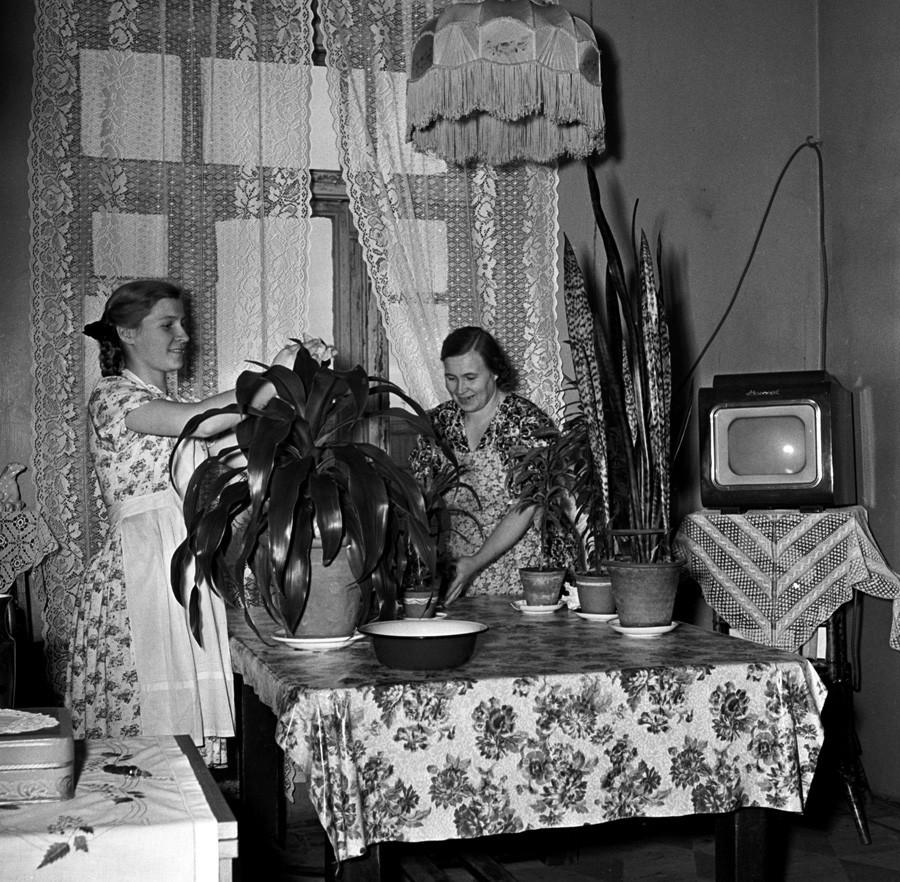 Ученичката в 10-ти клас Татяна Круглова помага на майка си в домакинска работа, 1955 година