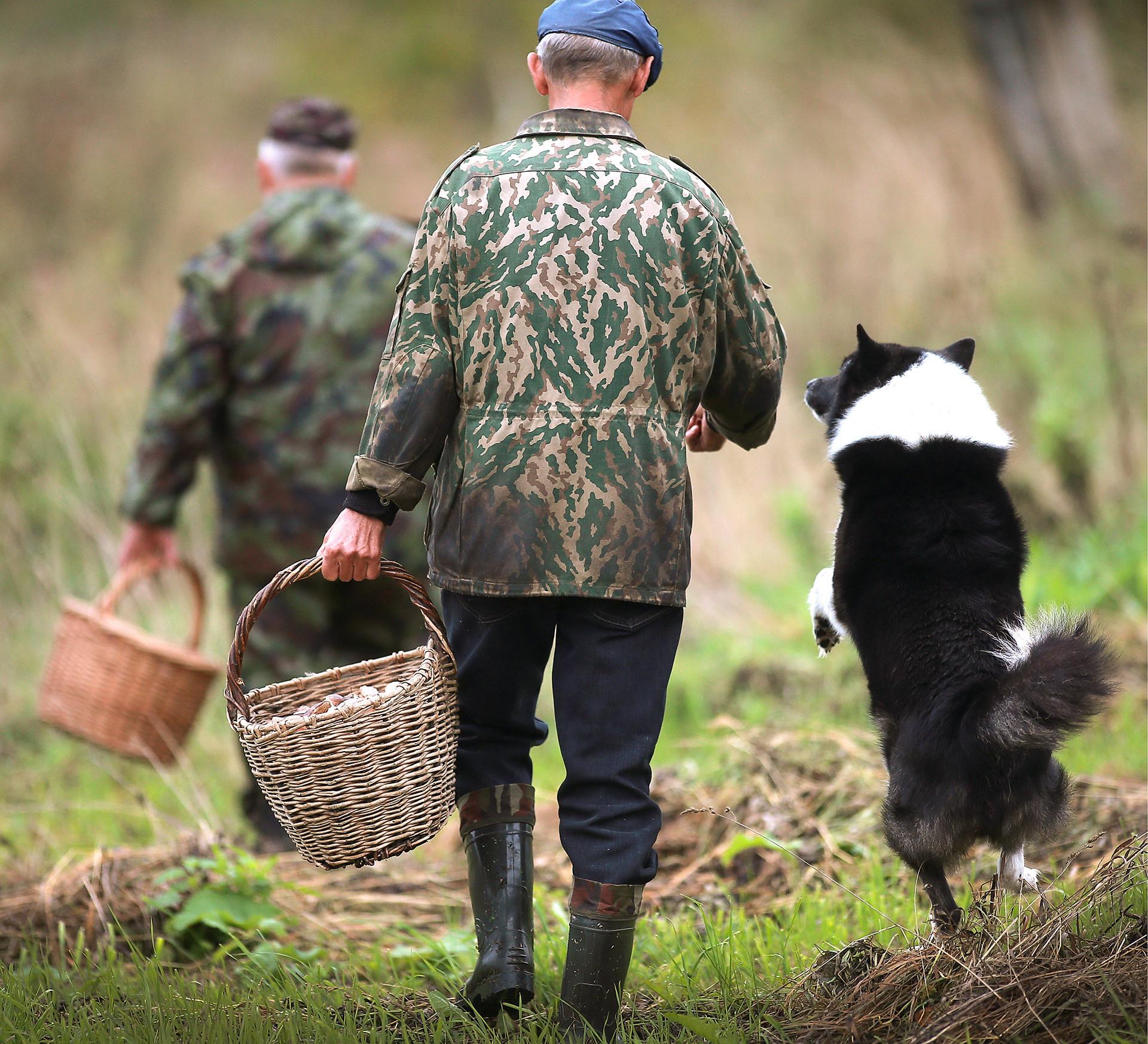 Até os cachorros russos são loucos por cogumelos!