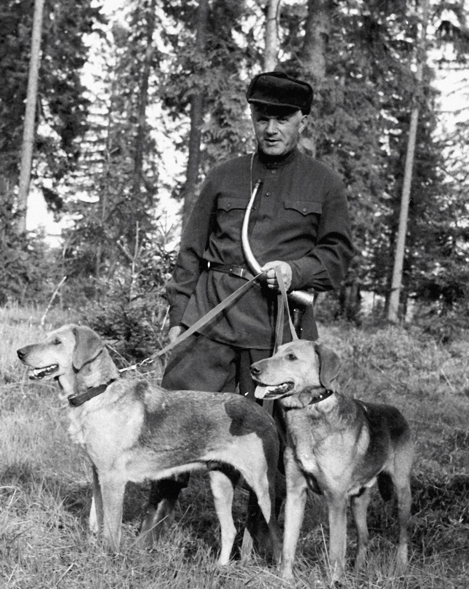 Karelski lovac sa svojim psima, ruskim goničima Šugajem i Kopejkom.