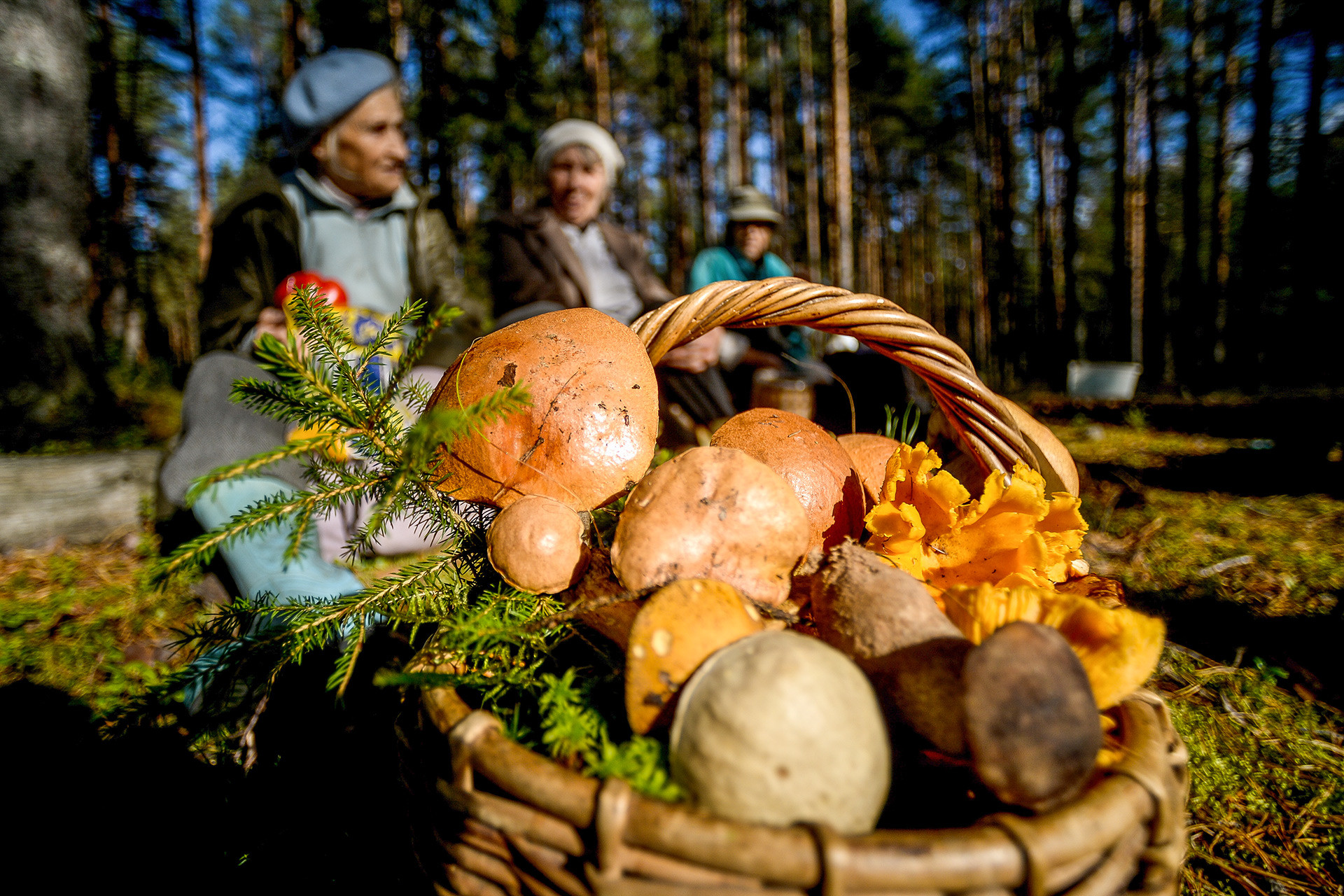 Babushkas selling mushrooms in the Novgorod Region.