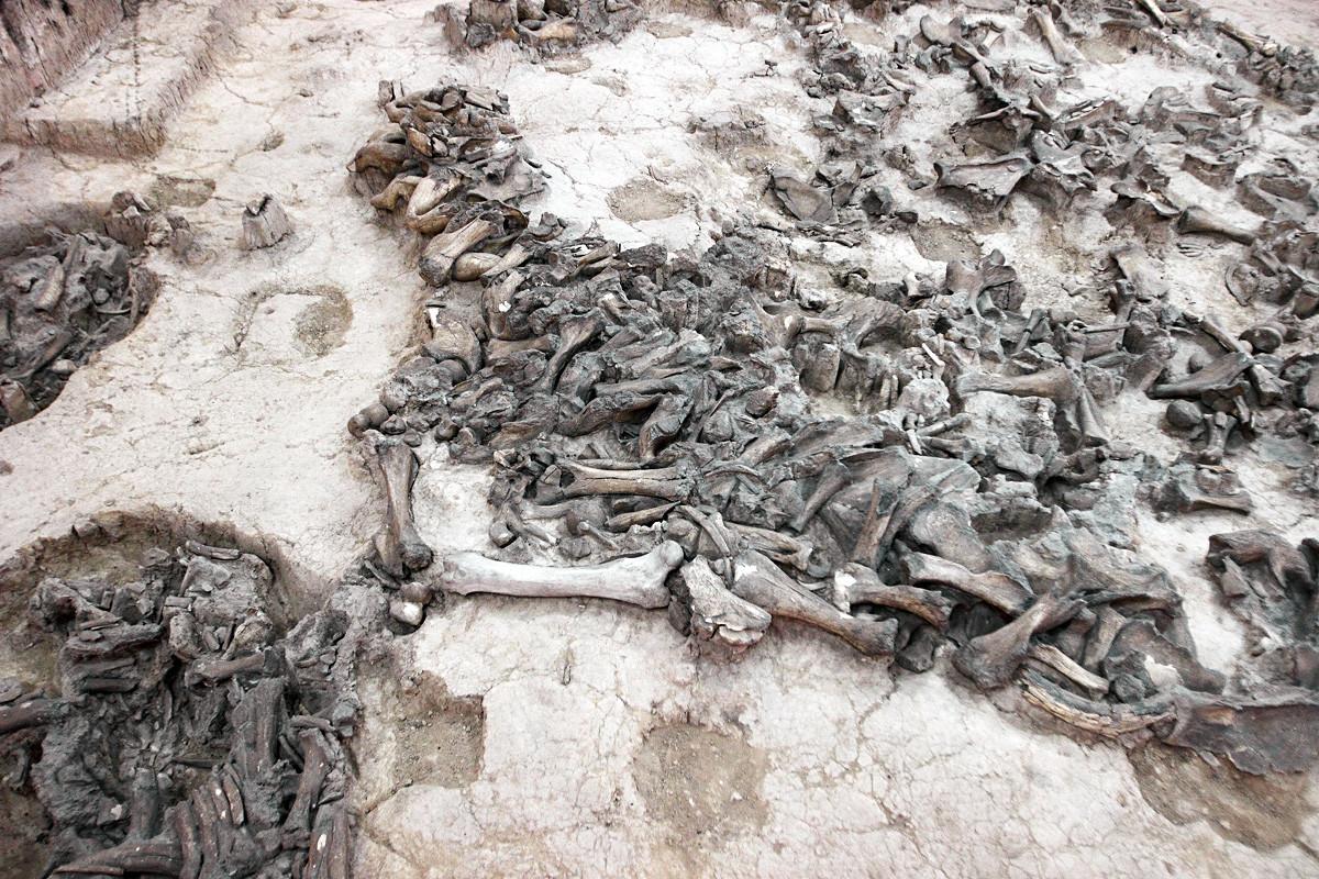 Mammoth bones.