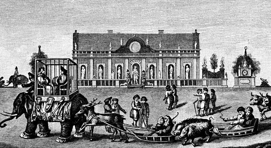 Los elefantes durante la boda en la Casa de Hielo, 1740.