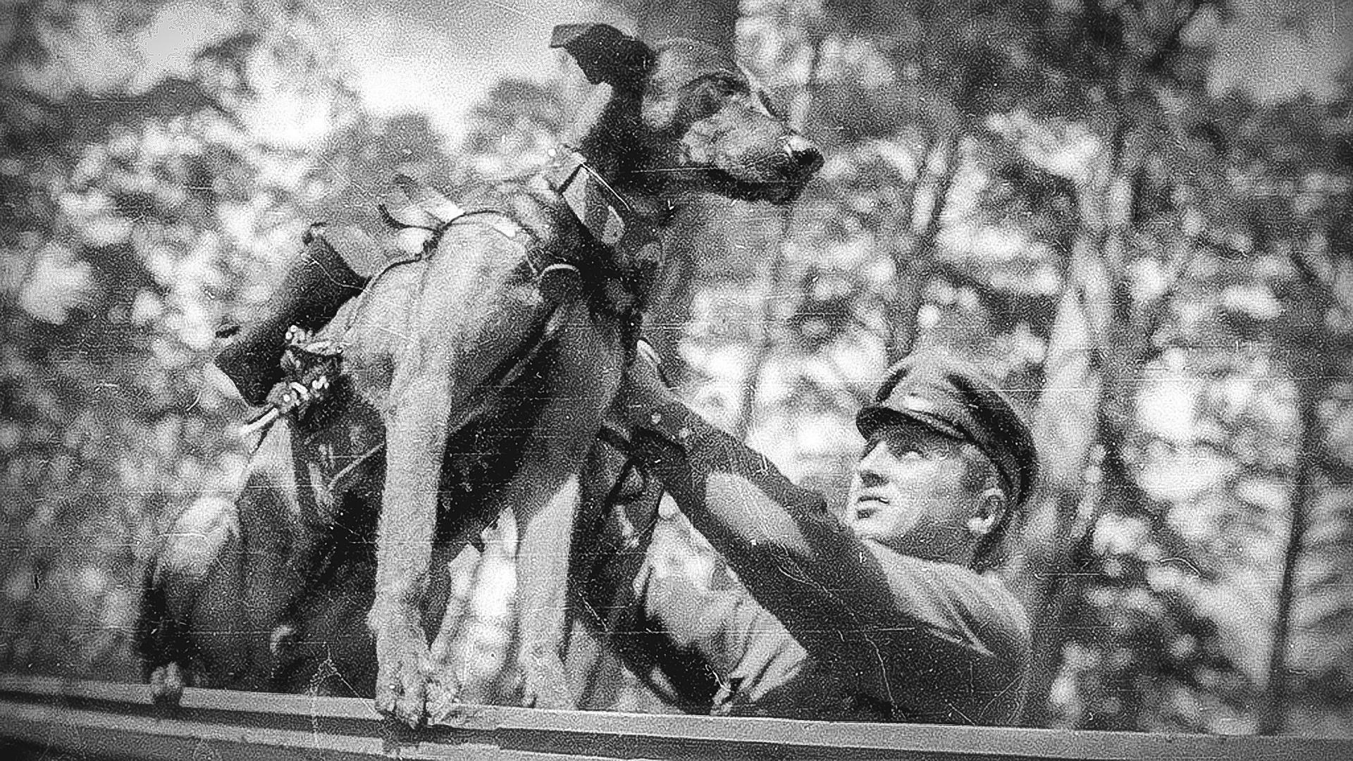 Hasil gambar untuk anjing anti tank soviet