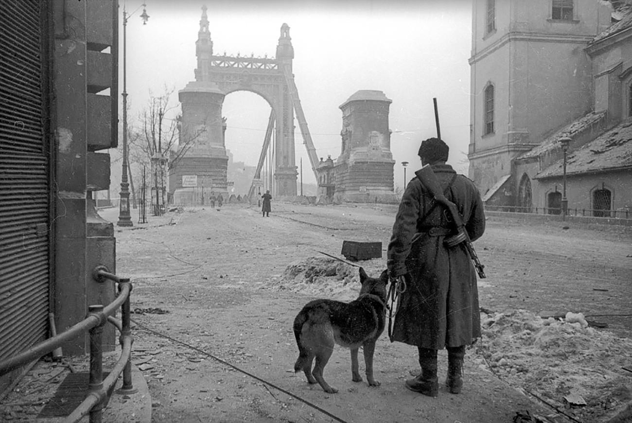 Припадник јединица за уклањање мина са псом испред Сечењијевог ланчаног моста, Будимпешта/Јевгениј Халдеј