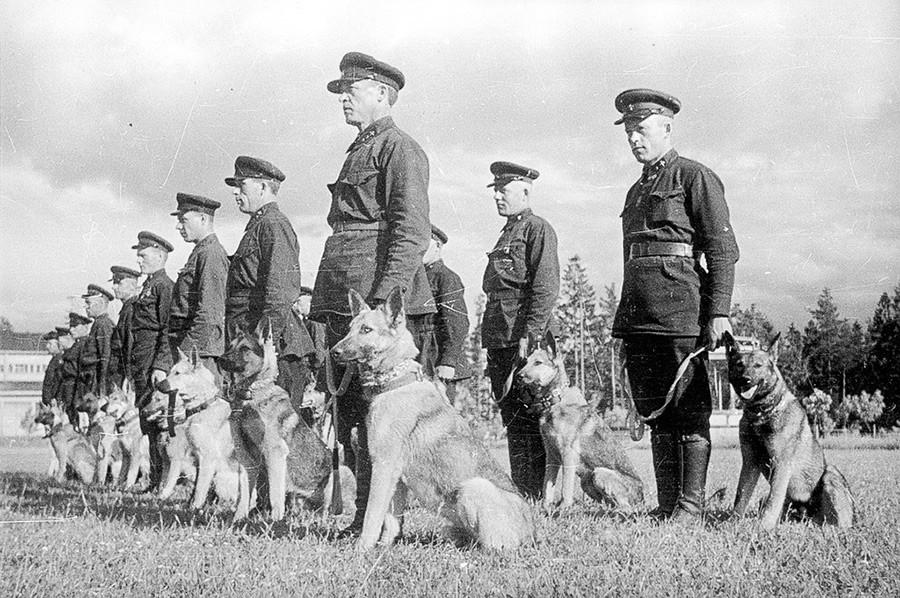 Работничко-селска Црвена армија. Одгледувачница на службени кучиња.