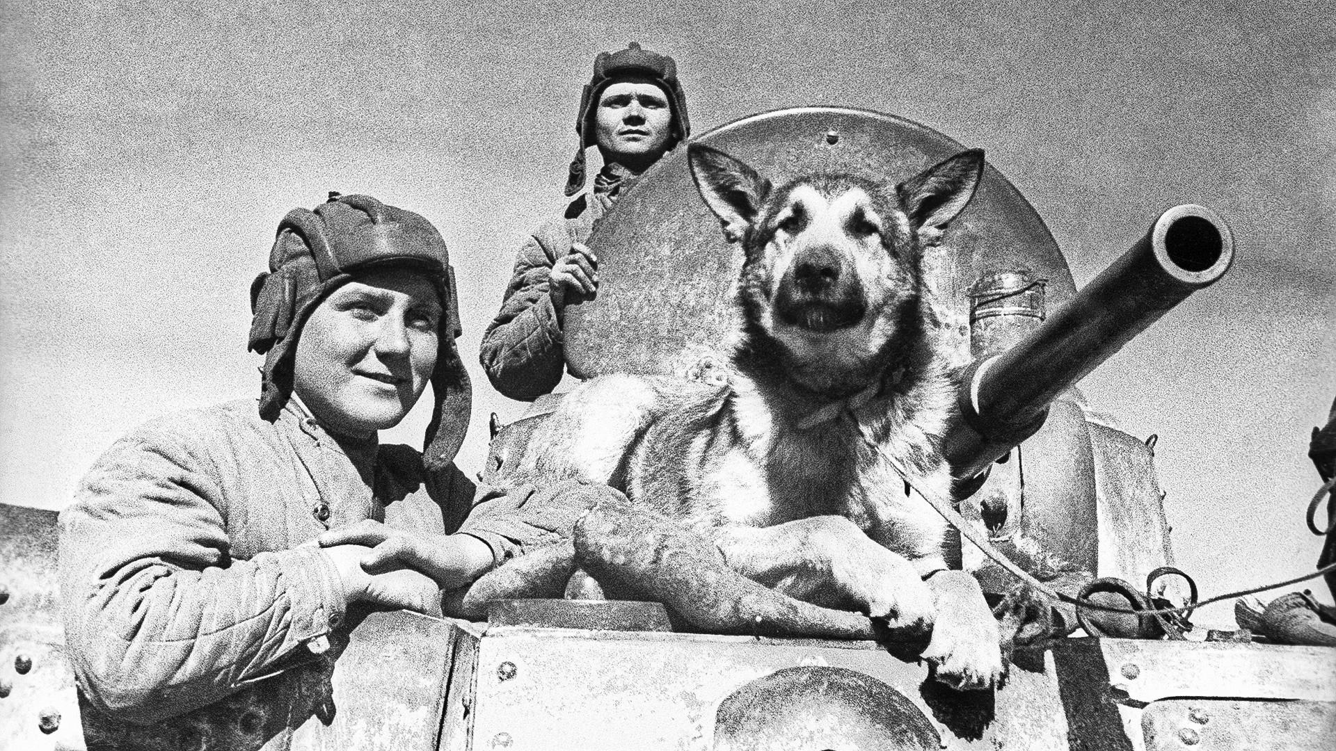 Голема татковинска војна, Јужен фронт. Екипа на оклопното возило БА-10 со кучето Џуљбарс.