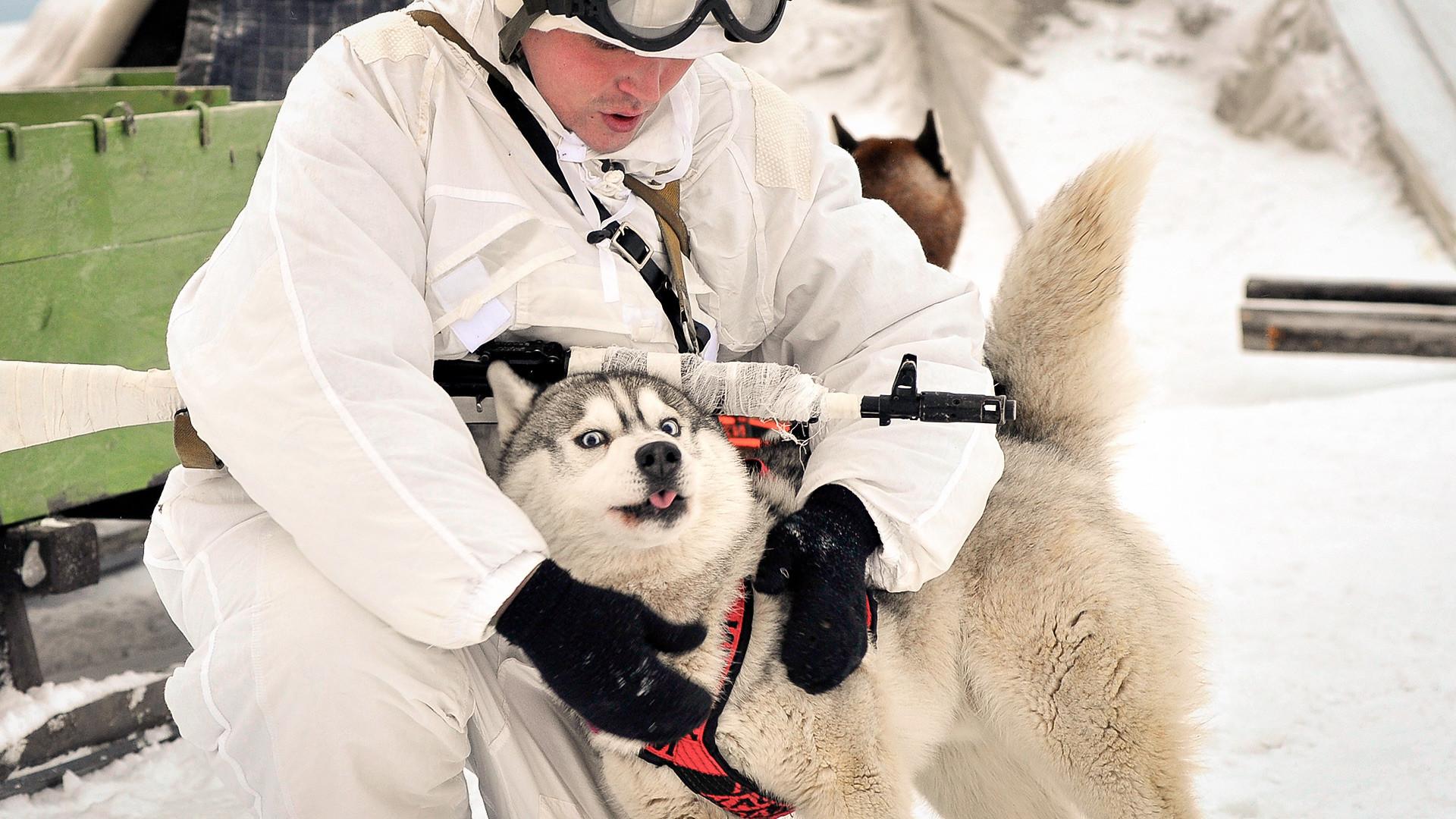 Припадник на арктичката мотострелачка бригада со запрежно куче, во близината на населеното место Ловозеро.