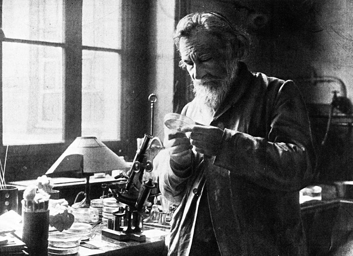 Ilya Mechnikov memeriksa isi cawan petri.