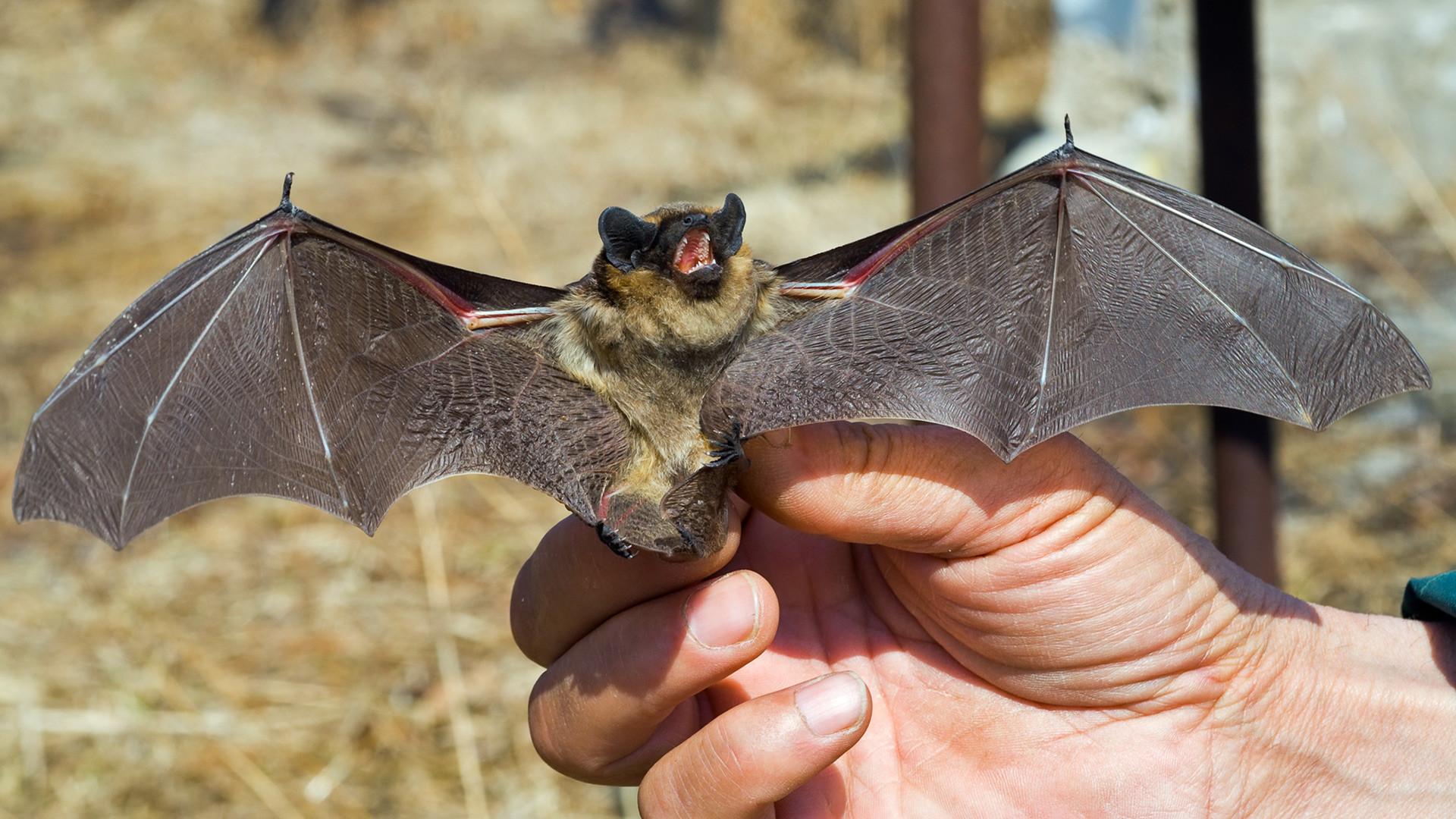 людей картинки про летучих мышей это