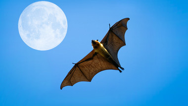 Are there any vampires lurking among Moscow's bats?