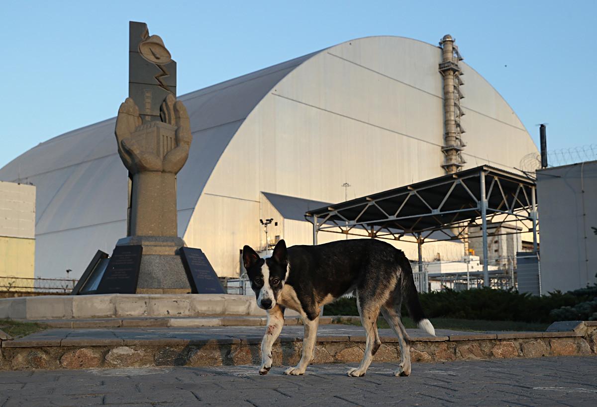 野良犬が記念像の前を歩いている。後には原発事故を起こした4号炉の周りに作られた新しい巨大な囲いがある。2017年8月18日。