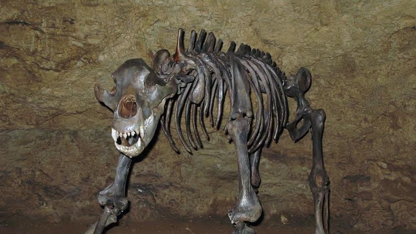 Костур на пештерска мечка