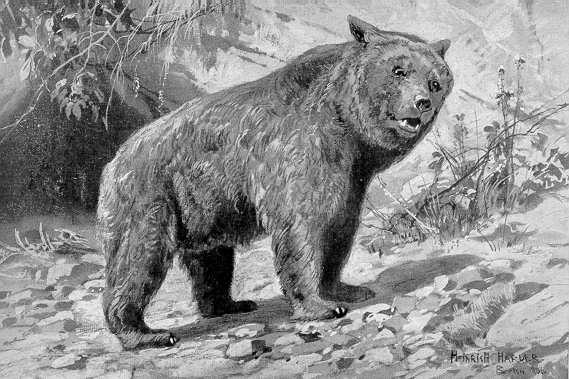 Илустрација пећинског медведа