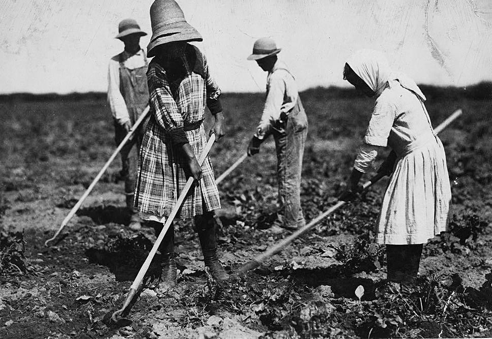 Des travailleurs russes dans une plantation de betteraves, âgés de 10, 12, 14 et 18 ans, arrivés depuis le Sud de la Russie 10 ans auparavant. Ils travaillaient tout l'été et, après la fin de la période de soudure à l'automne, ils allaientà l'école. Sugar City, Colorado, juillet 1915.