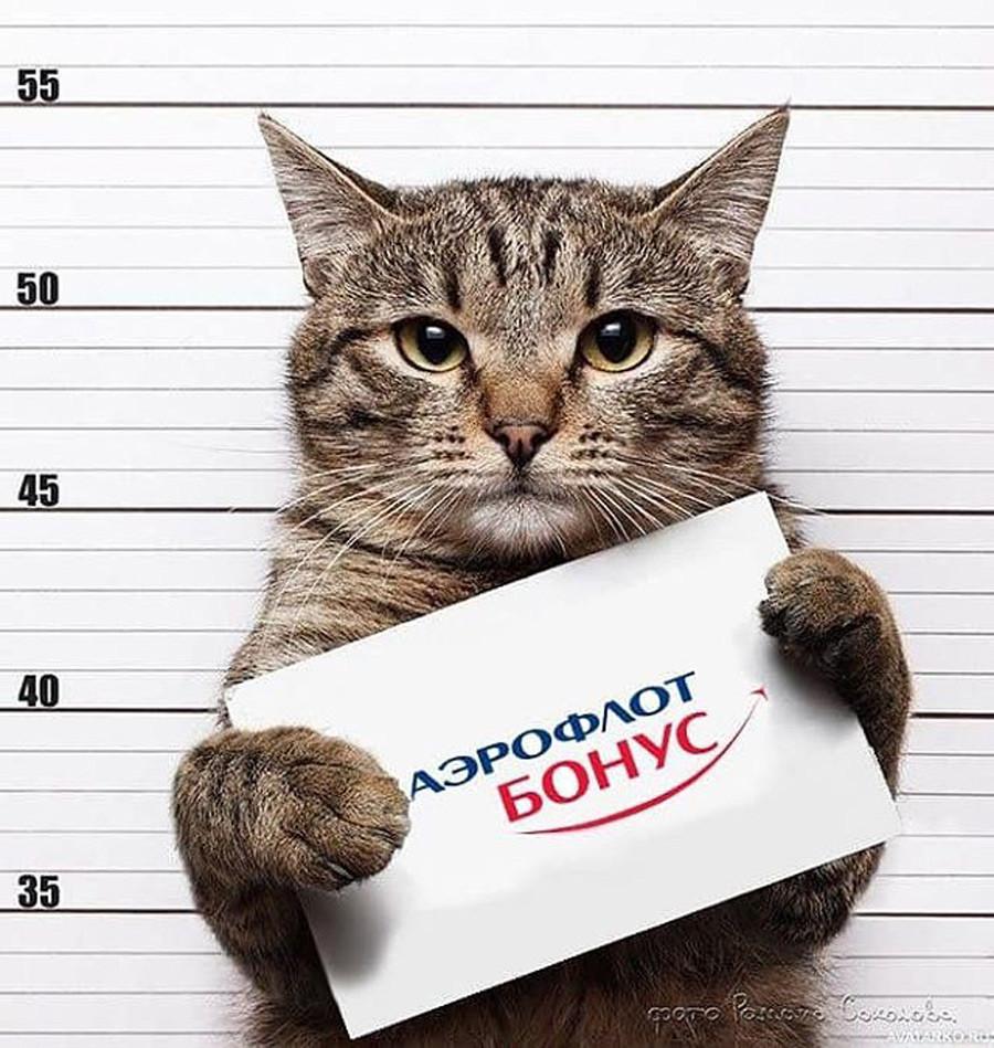»Aeroflot Bonus«